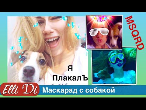 Приложение MSQRD. Приколы с собаками Elli Di. Маскарад | masquerade.