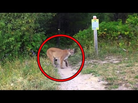 Top 15 Most Scary Videos Caught In The Woods