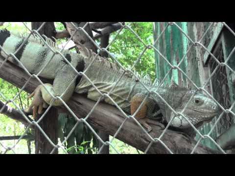 WILDLIFE FRIENDS FOUNDATION THAILAND WFFT Wildlife Rescue Centre