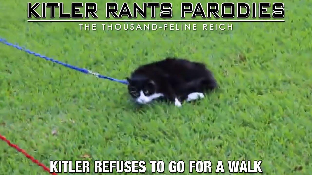 Kitler refuses to go for a walk