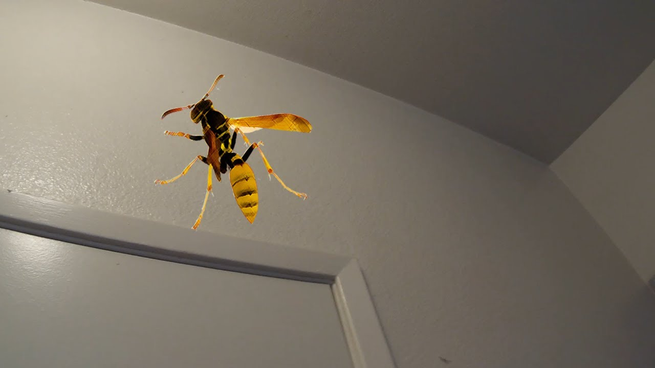 Trapped In The Bathroom With A Wasp YouTube