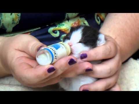 Как выкормить в домашних условиях котят 88