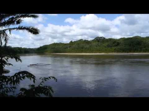 Manu Park , Peru -  Wild Watch Peru - Wildlife Tours