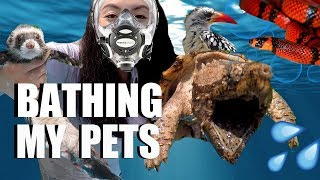 Bathing My Pets - How I Bathe All My Animals