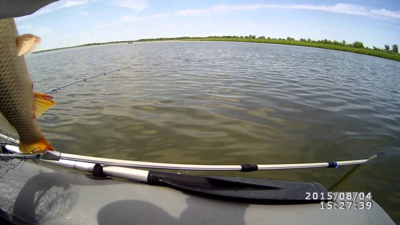 ловля сазана в сентябре на нижней волге видео