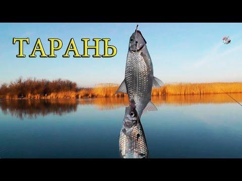 все о рыбалке тарани