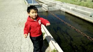 Ashton feeding rainbow trouts at Hot Creek Hatchery