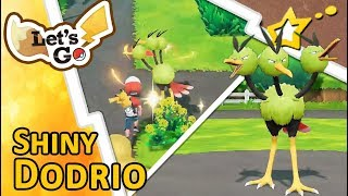[LIVE!] CLUTCH CAPTURE! Shiny Dodrio after a 31 Catch Combo on Route 17! (Pokemon LGPE)