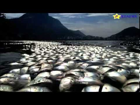Brazil : Workers had pulled more than 71 Tons of dead fish in Rio lagoon