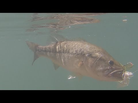 Strike King Spinnerbait Large Mouth Bass Fishing