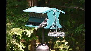 #Bird Feeder video New Hampshire
