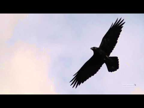 Скачать песню ладони ворон