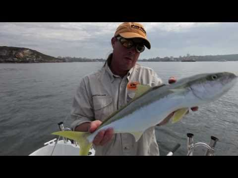 Fishing Sydney Harbour with Tsunami Stick Baits