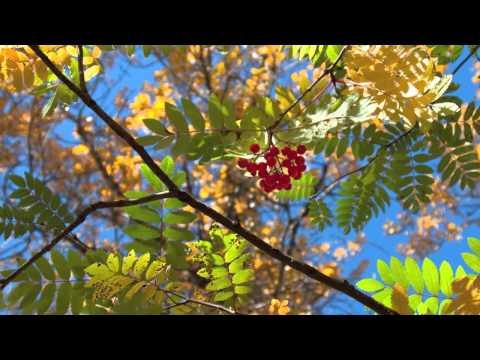 David Wilcox - In This Stream