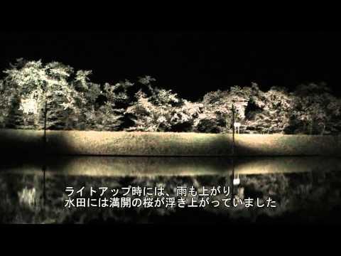飛騨市 ~御所桜のライトアップ~
