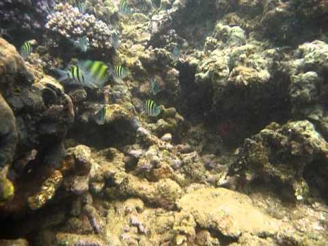 Sri Lanka,ශ්රී ලංකා,Ceylon,Coral Reef (24)