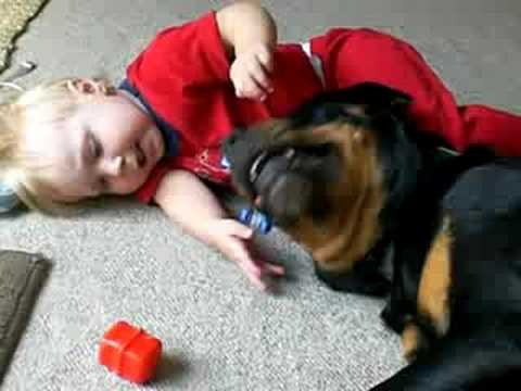 Baby's Best Friend, his Rottweiler Video