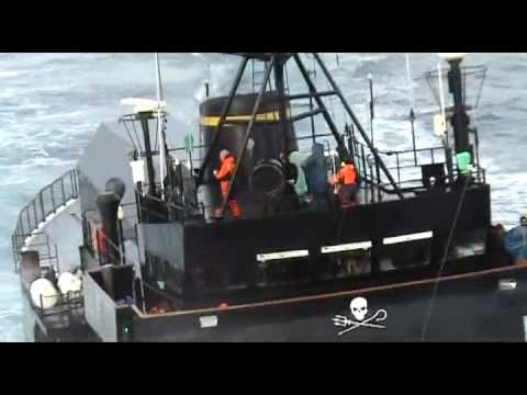 Sea Shepherd ramming japanese whalers, second angle.