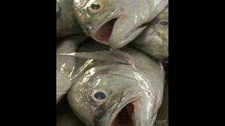 The Fish Head Song