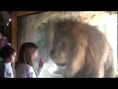 leon trata de atacar a una niña pero la wea sale chistosa xD!!