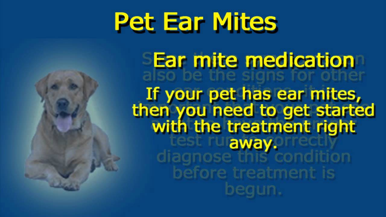 How to Remove Ear Mites from a Dog