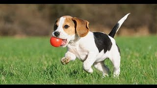 CARTOON FOR KIDS | BABY| DOG CUTE - ENGLISH FOR KIDS