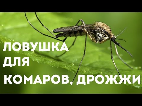 Ловушка для комаров своими руками без дрожжей