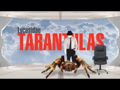 Tarantulas, por explainers.tv