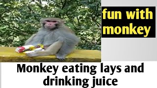 Monkey eating lays and juice | fun with monkey.