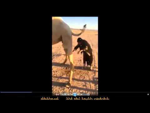 Man drinking camel urine