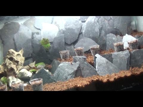 Vom Aquarium zum Terrarium teilweise ewiges Terrarium