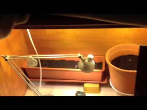 Watch armario casero cultivo streaming hd free online for Armarios cultivo interior