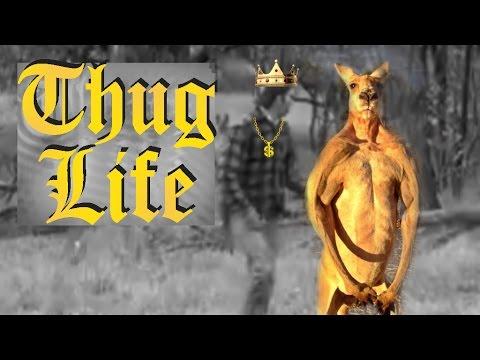 Man Punches Kangaroo - Thug Life