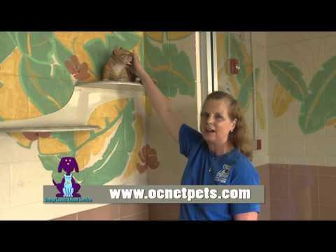 Orange County Animal Services - I Volunteer Because . . . Vivian