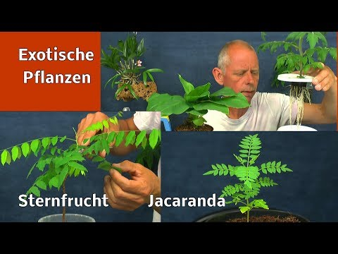 Exotische Pflanzen pflegen schneiden gießen düngen und mehr