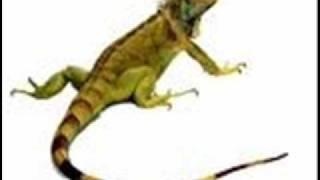 Watch Iguanas Latin Kings video