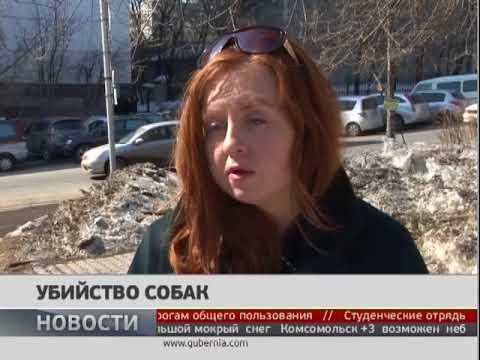 Убийство собак. Новости 22/03/2018 GuberniaTV