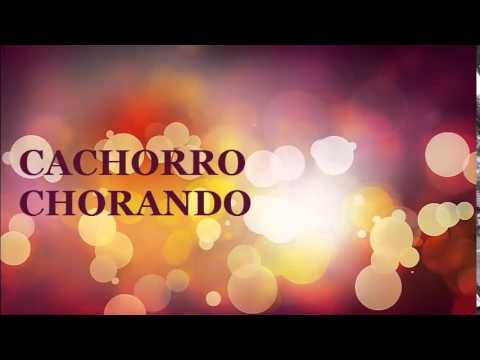 EFEITO SONORO  CACHORRO CHORANDO   -  EFFECT VOICED  UNHAPPY DOG   - QUALIDADE VINHETA  2014  GRATIS