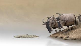 මෝඩයන් සමඟ වාදයට යෑමේ ප්රතිවිපාක !!! Wildebeest from Birdbox Studio