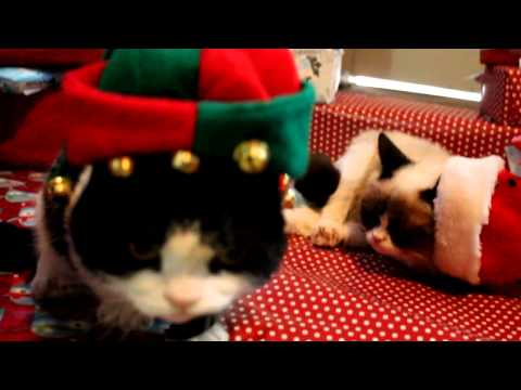 Grumpy Cat and Pokey on Christmas