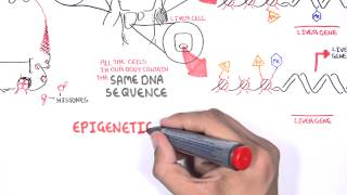 Epigenetics - An Introduction