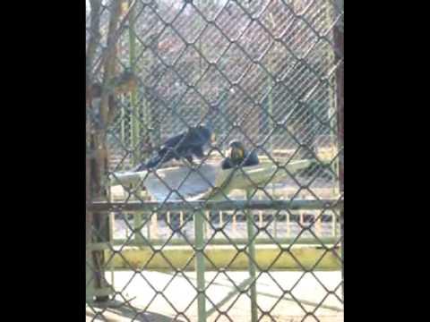 東山動物園のスミレコンゴウインコを見てきた