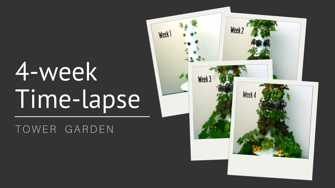 Watch Tower Garden 174 Grow 4 Week Time Lapse Youtube