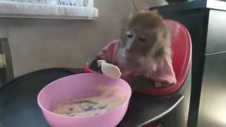 Смешные обезьяны) лучшие приколы