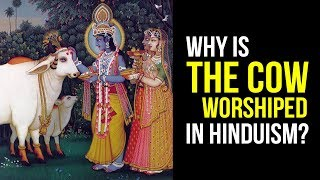 Video: In Hinduism, Cows are Non-Violent animals ('Ahimsa'), just like Hindus