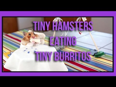 Tiny Hamster Eating Tiny Burritos (ep. 1) video
