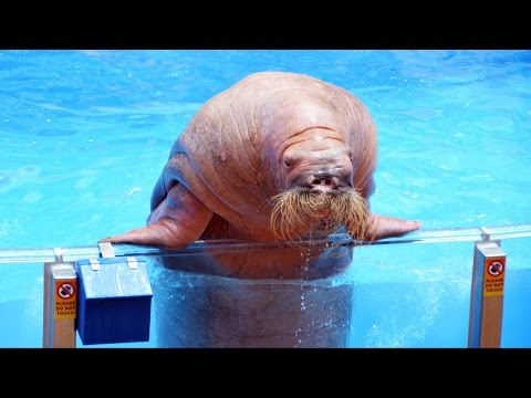 Sea Lion High Show Premiere Highlights w/ Michael Fletcher VP Entertainment SeaWorld Orlando