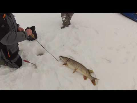 рыбалка на рыбинском водохранилище на жерлицы