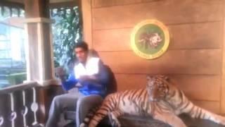 Susto haciéndose foto con un tigre