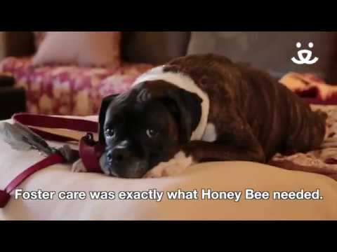 Best Friends Animal Society - How foster care saved Honey Bee.